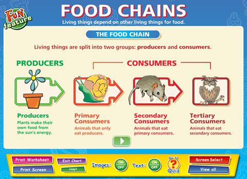 Food Chains - Content - ClassConnect