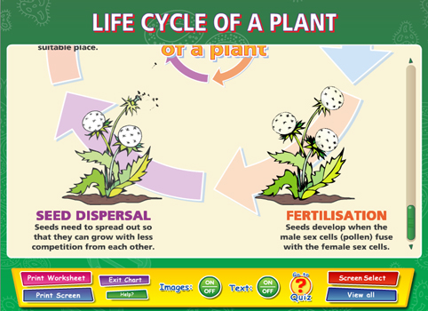Life cycle of a plant - Content - ClassConnect